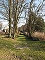 Malčice (Všelibice), stromy.jpg