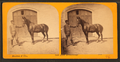 Man holding horse in front of stable door, by Benj. L. Denton & Co..png