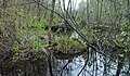 Marais de Brompton Groove - panoramio (2).jpg