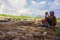 Mengais rejeki di tanah sendiri. Suku Dayak di Hutan Kalimantan Barat.jpg