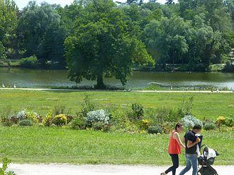 Parc de Bourran - Alder alongside the pond, June 2016