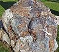 Metamorphosed pillow basalt (Ely Greenstone, Neoarchean, ~2.722 Ga; large loose block at Ely visitor center, Ely, Minnesota, USA) 2 (21427305396).jpg