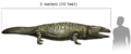 Metoposaurus size comparison with human.png