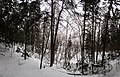 Mezs ziemaa netalu no alas - panoramio.jpg