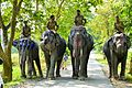Mighty Elephants, Kaziranga National Park.jpg