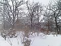 Minnesota Snow - Knee Deep - More New Snow Coming - March 5th, 2013 - panoramio.jpg