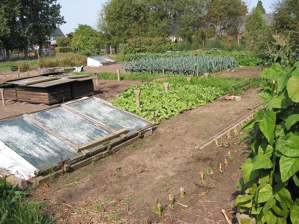 Groentetuin wikipedia for Groenten tuin