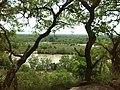 Mole park Vegetation.jpg