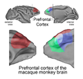 Monkey prefrontal cortex - journal.pbio.1001228.g001.png
