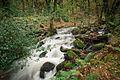 Moor Brook in Autumn, Dartmoor.jpg
