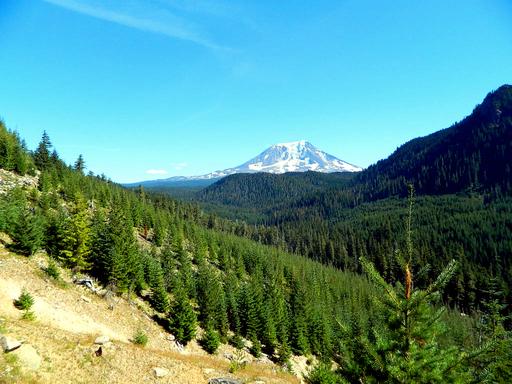 Mount Adams from East Canyon Ridge
