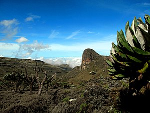 Kalenjin people - Mount Elgon, a common Kalenjin point of origin
