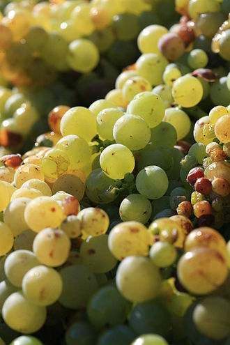 History of South African wine - The Cape wine estate of Constantia brought world wine to South Africa for their Muscat wines.
