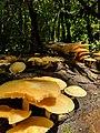Mushroom meets Sunshine.jpg
