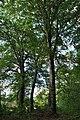 Mykulyntsi-buky-15056885.jpg