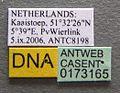Myrmica ruginodis casent0173165 label 1.jpg