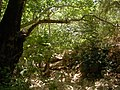 Nahal Amud trail of green - panoramio.jpg