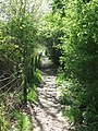 Narrow Path - geograph.org.uk - 1264489.jpg