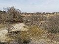 Nationaal Park Kennemerland (26498823287).jpg