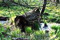 Nationalpark Jasmund - Modderstubben (10).jpg