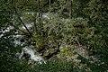 Natur in der Rabischschlucht 20190819 027.jpg