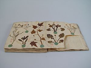 Herbarium - Herbarium book with Japanese plants, Siebold collection Leiden, 1825
