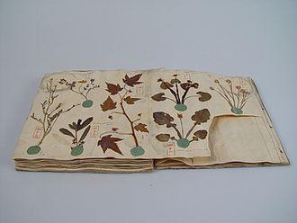 Herbarium - Herbarium book with Japanese plants, Siebold collection Leiden, 1825