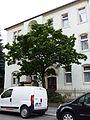 Naturdenkmal Japanischer Flieder Gustav-Freytag-Straße 30 Dresden 01.JPG