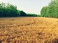 Nature's contrast.jpg