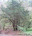 Naturschutzgebiet Eifgenbach.5.JPG