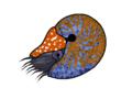 Nautilus RishiC.png
