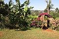 Near Kisii - Kenya.JPG