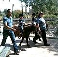 Negev Zoo pony ride IMG 1114.JPG