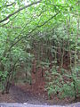 New Park Wood - geograph.org.uk - 584754.jpg