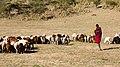 Ngorongoro, Tanzania - panoramio (6).jpg