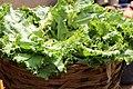 Nigerian Lettuce.jpg