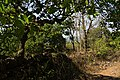 North Goa, March, 2018-2.jpg