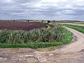 North Kelsy Carrs - geograph.org.uk - 290291.jpg