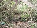 Oahu-Kahaluukalo-terraces3.JPG
