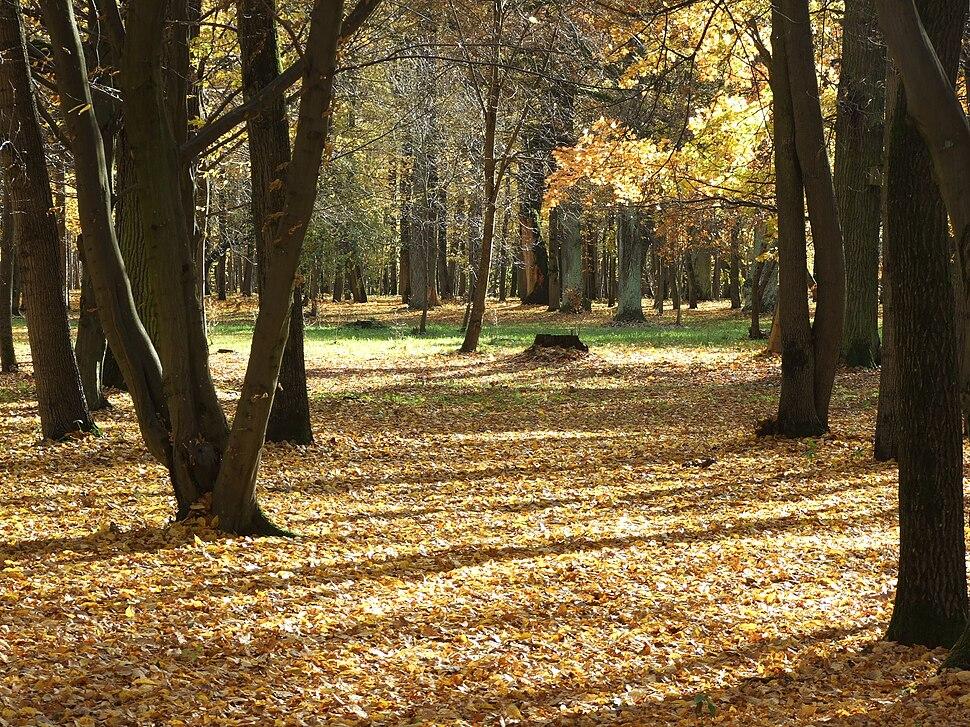 Oak forest park