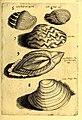 Obseruationes circa viuentia, quæ in rebus non viuentibus reperiuntur - Cum micrographia curiosa siue Rerum minutissimarum obseruationibus, quæ ope microscopij recognitæ ad viuum exprimuntur - his (14597076450).jpg