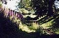 Offa's Dyke Path, near Trefonen - geograph.org.uk - 343174.jpg