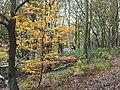 Orange tree on Stapleford Hill - geograph.org.uk - 622263.jpg