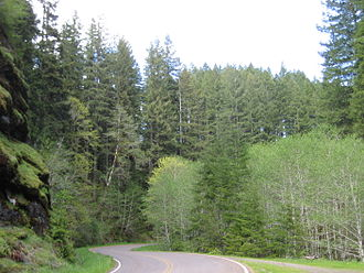 Oregon Coast Range - Road through the Northern section showing the mix of deciduous and coniferous trees