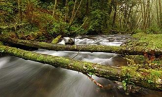 Rock Creek Wilderness - Image: Oregon Rock Creek Wilderness 2 Greg Lief