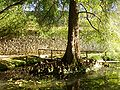 Orto Botanico Comunale di Lucca - pond and city wall.JPG