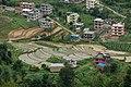Paddy fields, Ghyampe Danda, Bhaktapur.jpg