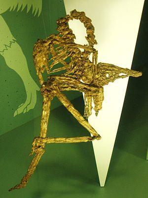 Palaeotis - Fossil
