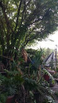 Palm Trees in Makanda Illinois