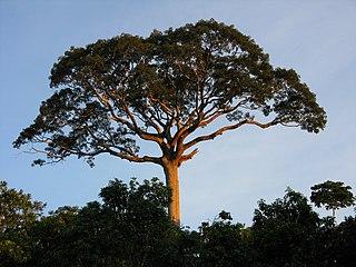 Panguana nature reserve in Peru